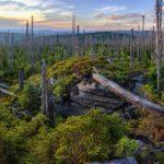 Jihočeští Zelení odmítají útoky Jihočeského kraje na Národní park Šumava